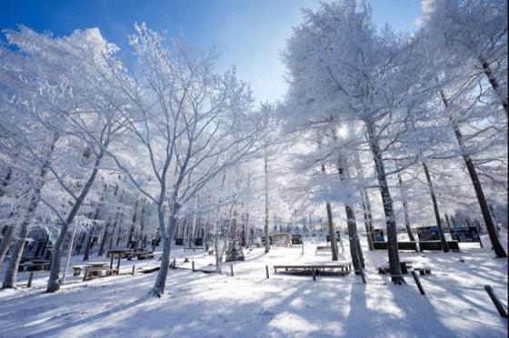 taebaek-snow-festival0